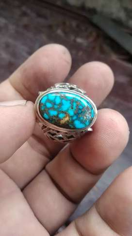 Pirus persia blue fancy