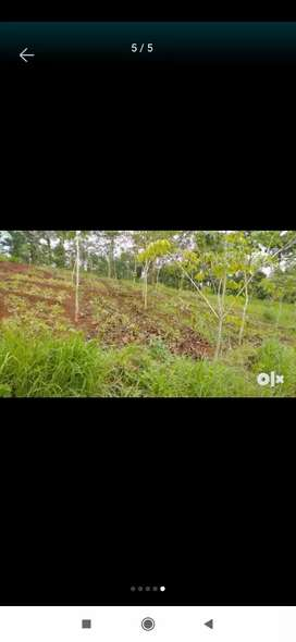 4 Acres of land with old pattayam