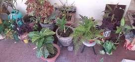 Plants for Sale, 200 each