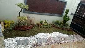 Tukang taman rumah-jual tanaman hias dan rumput taman