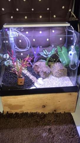 aquarium akuarium aquascape fullset bending