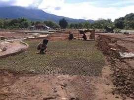 Pekerja dan penyedia Rumput Hias daerah Kendari
