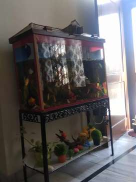 3ft aquarium beautifully crafted and maintained