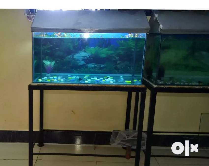 2 feet Fishtank set-up with Stand for 1500₹ 0