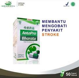 Obat Stroke Herbal Paling Ampuh Di Indonesia