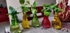 Mini glass pots