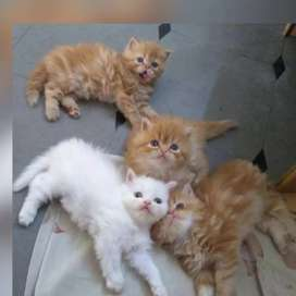 All types kittens available