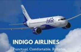 Vacancies in Indigo Airlines for male or female