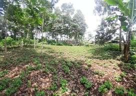 Tanah kebun strategis di pakuhaji 10mnt jln raya cipageran