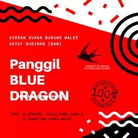 Sp.Blue Dragon suara panggil walet BAN ori open protek garansi