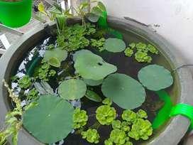 Mini Pond Setup (New) aquarium plants pond