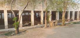 Poultry Open Shed for layer avaialble for rent in Multan