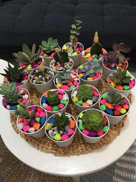 Kaktus dan sekulen ready balikpapan