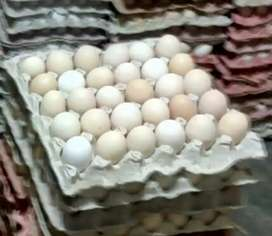 Country Chicken Egg and mushroom wholesaler