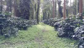 8 Acres of well maintained coffee estate for sale in Sakleshpur