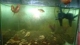 Aquarium 50x50x50
