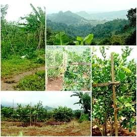 Lahan Perkebunan 2 Ha Tawangmangu 150rb/m2 900 mdpl