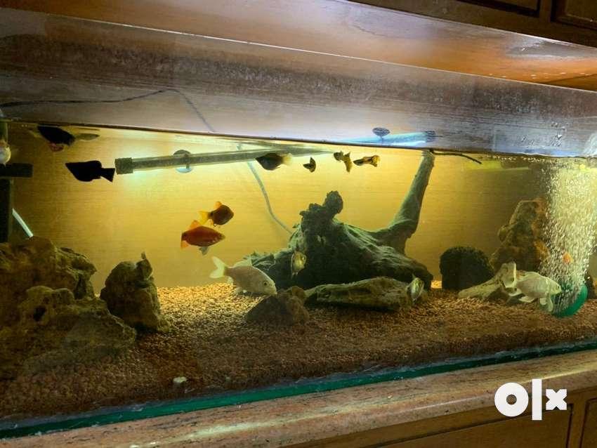 Aquarium and accessories 0