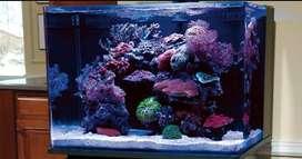 Aquarium Laut settup area Jkt Magelang