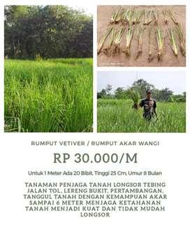 Petani Tanaman Vetiver Untuk Obat Dan Penahan Longsor Atau Erosi Tanah