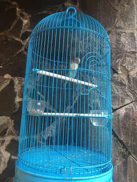 Jual burung love bird ,jual full set sama kandang