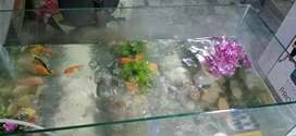 Fresh Fish Aquarium for sale