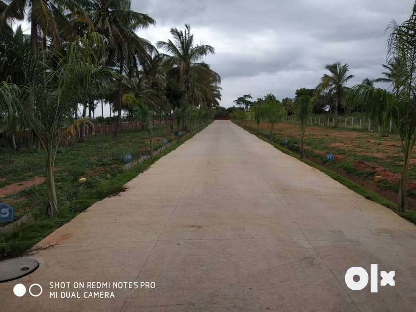 3*40 Residential Site for Sale in Ramohalli,Panchayath Khatha 0