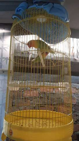 Di jual love bird