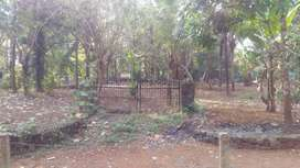 Cheap plot for sale in Nelluwai 1.6 Lkhs/cent