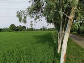 land for sale mukerian