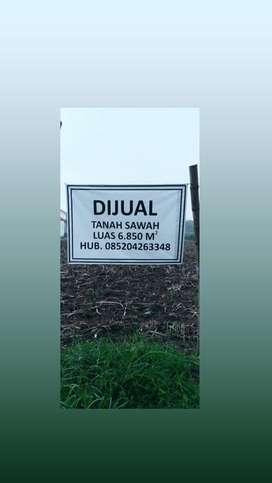 Dijual tanah sawah lokasi kediri dekat gor jayabaya