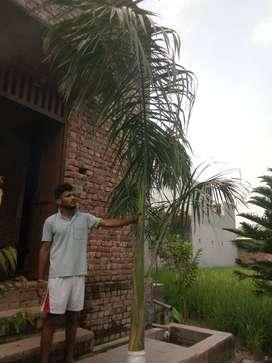 Badhiya ped hai