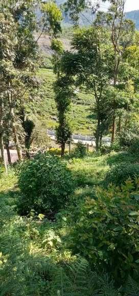 Land for sale at Suryanelly town Munnar Idukki district Kerala