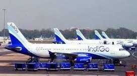 job 2020 indigo airlines urgent hiring