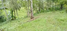 Jual tanah desa gunung salak kebun dan bekas sawah 1H lebih