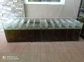 Aquarium sekat P 150 * L 50 * T 50