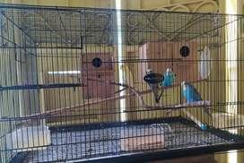 2 pasang burung parkit & kandang