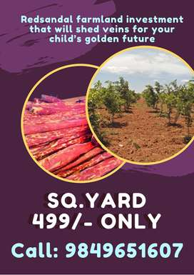 Redsandal farmland investment that will shed veins for you