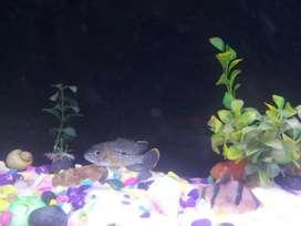 i want to sell my fish aquarium