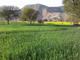 Residential, comrcl and agrctl plot available  Haripur