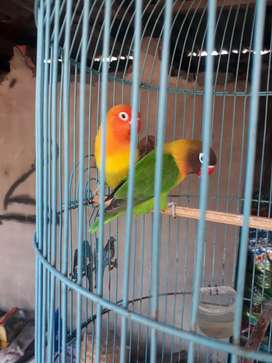 Burung + sangkar
