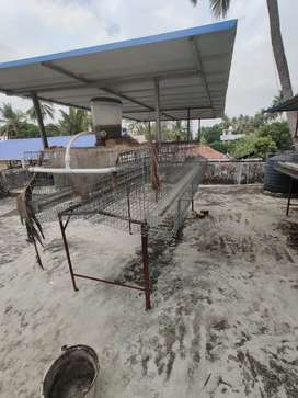 Used Hybrid chicken cage for sale