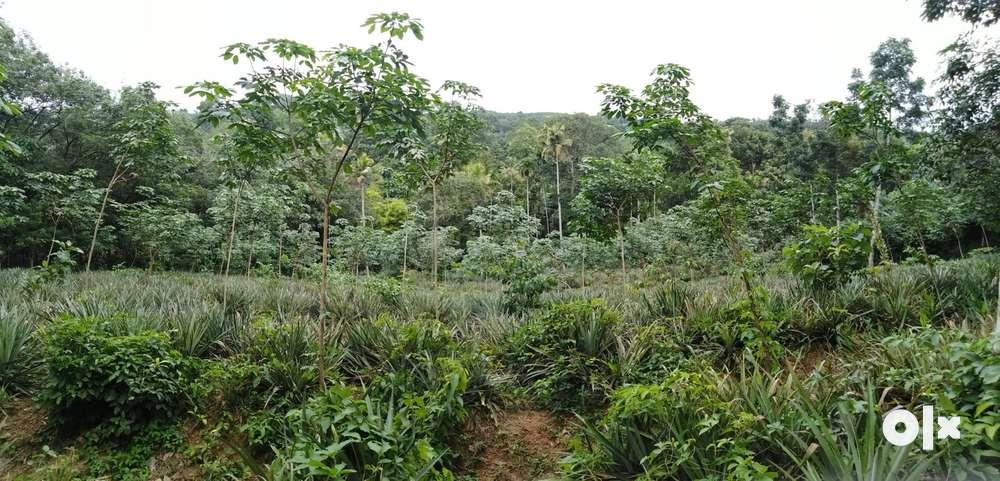 1 acre 14 cents rubber plot for sale