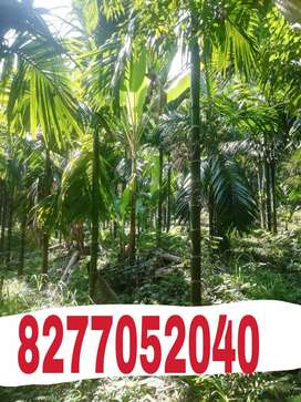 5.5 acres of land for sale.