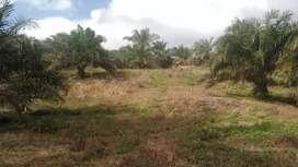 Jual Lahan Sawit 7 Hektar