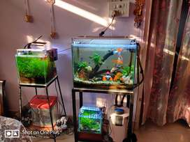 Selling all the aquarium with setup