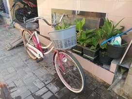 Di jual sepeda keranjang untuk sekolah