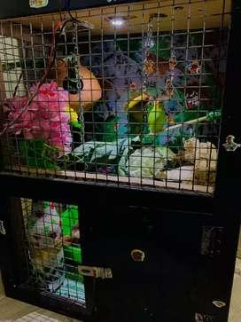 Brids  cage
