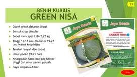 BENIH KUBIS Varietas GREEN NISA