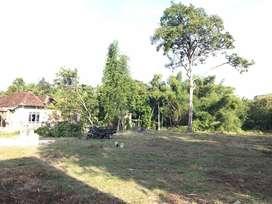 Kavling Selatan Kampus UMY, Diskon 25% Cocok Bangun Kost